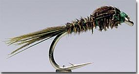 English Pheasant Tail